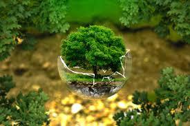 consultoria_ambiental